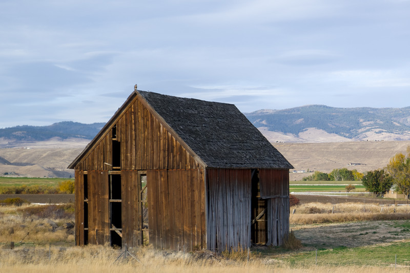 Ellensburg, WA Barn And Hawk
