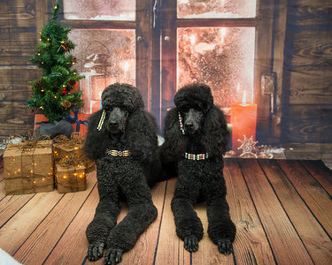 Pet Time Holiday Shoot - 2018
