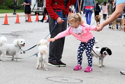 Elmhurst Pet Parade