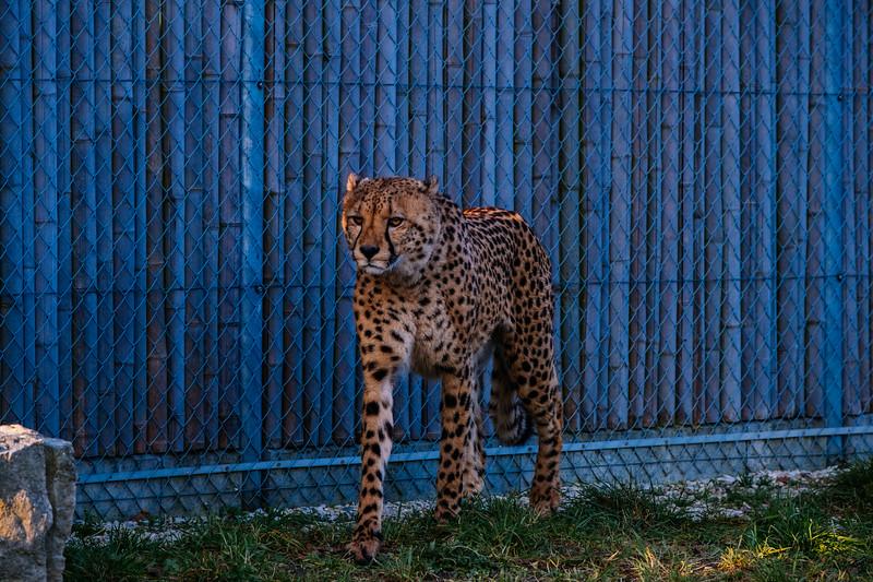 Tonis Zoo-0290.jpg