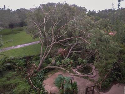 Special Report: Hurricane Irma at Walt Disney World