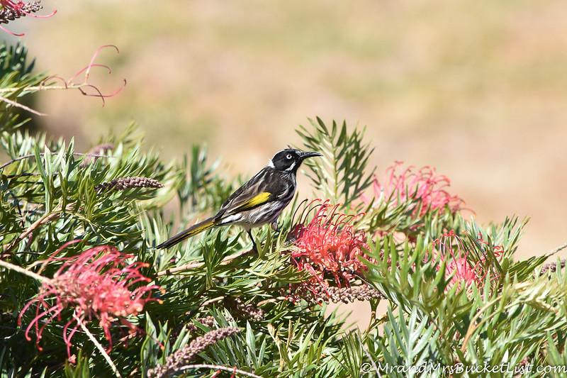 wildlife encounters in Western Australia 8.jpg