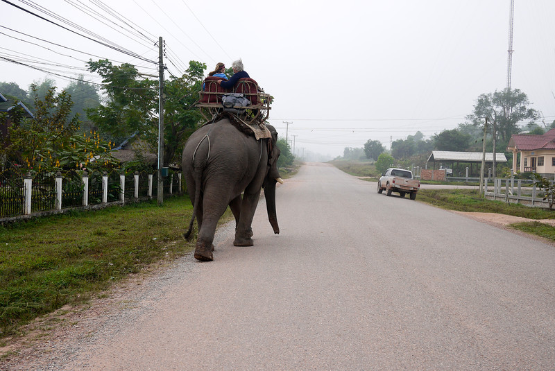 Elephant walking down the streets of Hongsa, Laos.