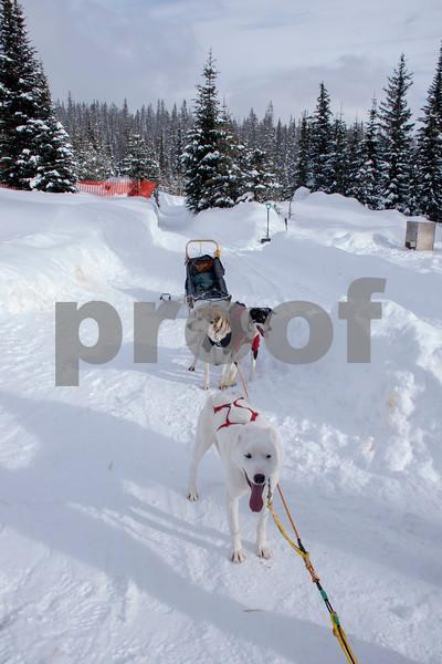 dog sled 1.jpg