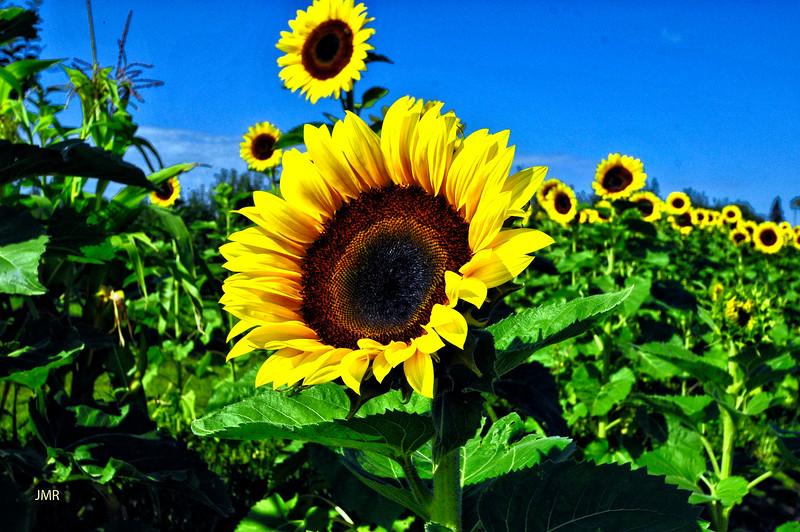 SUN FLOWER FAMILY .jpg