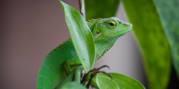 Sri Lanka Reptiles