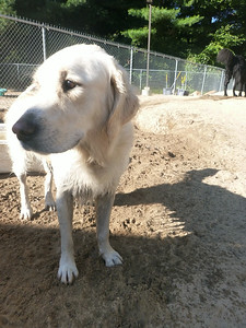All Dogs Gym 8-28-2014