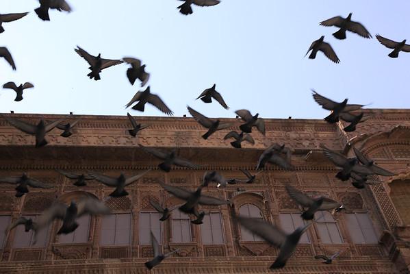 Jodhpur 2012