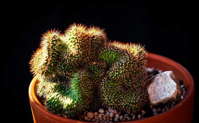 Cactus 091519-0147.jpg