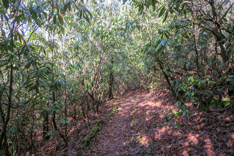 Appalachian Trail -- 3,120'