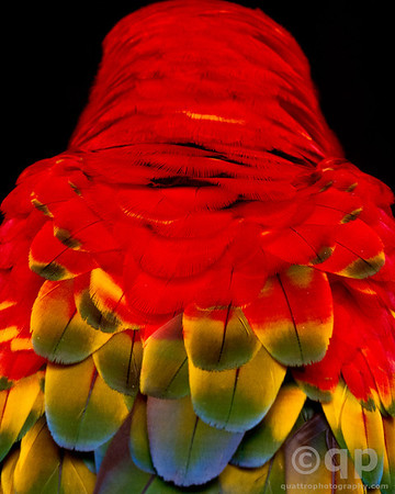 Tambopata Macaws and Parrots