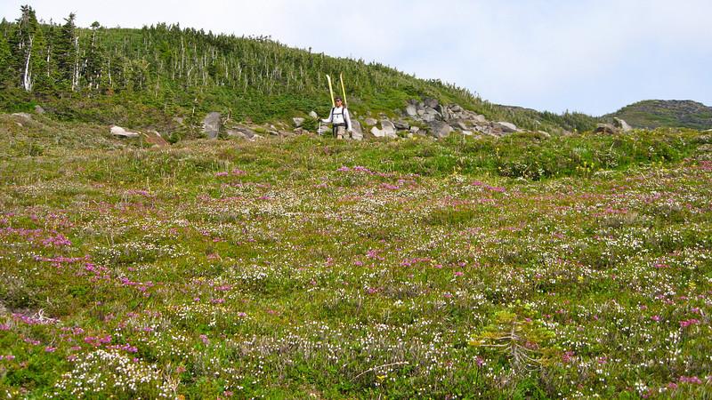 Scott and flowery meadow.
