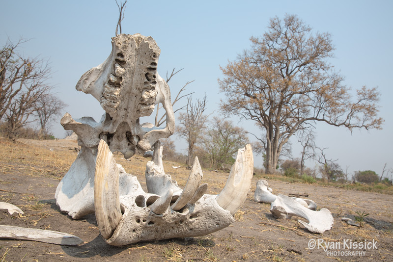 A chilling reminder of the struggle animals face during the dry season