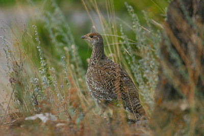 Birds of Pacific Northwest