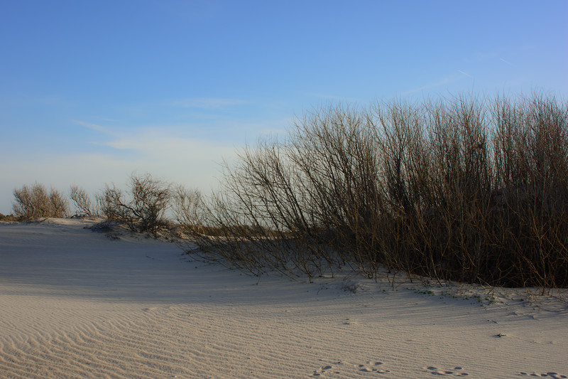 Peaceful Dune