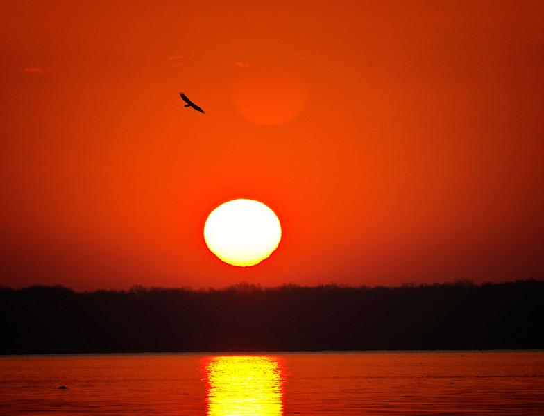 Rising eagle rising sun.  - Copy.jpg