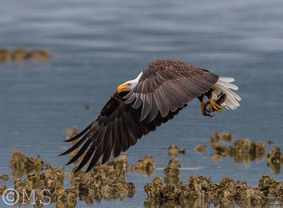 Bird Image Galleries