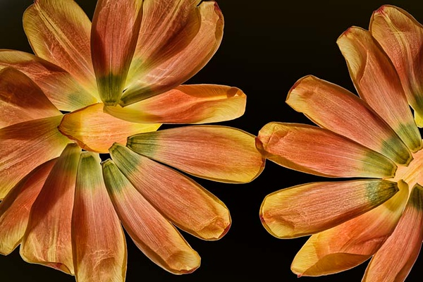 Flowers abstracts