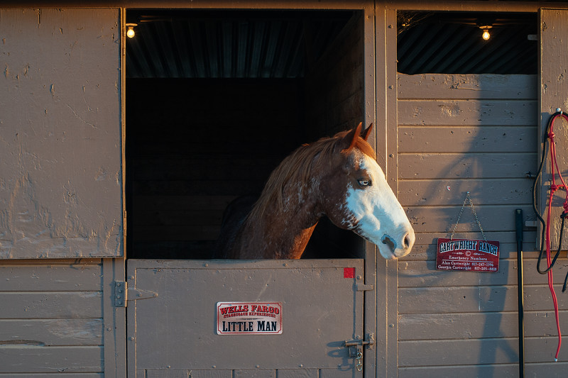 Wells Fargo horses in stable at L.A. Equestrian Center following the Tournament of Roses Parade on Jan. 1, 2019.