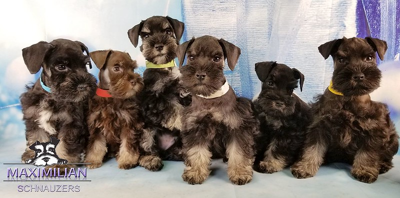 Hettie Pups 006.jpg