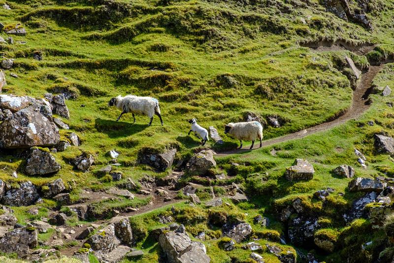 20190506 Isle of Skye 383.jpg