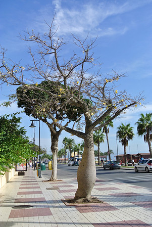 Torremolinos Spain 15-22, Oct, 2012