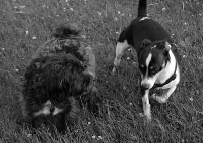 2010-06-15 Denville Dog Park