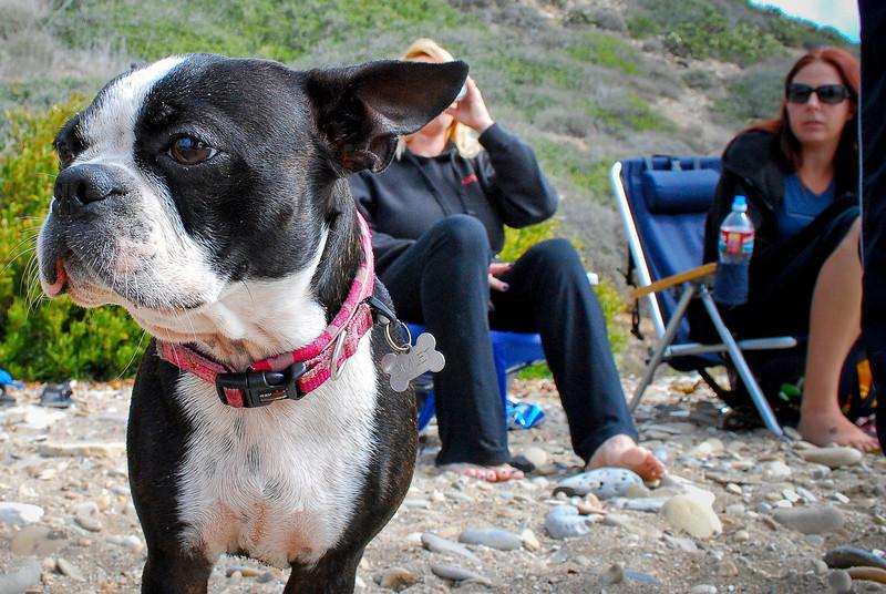 dogs_beach-064.jpg