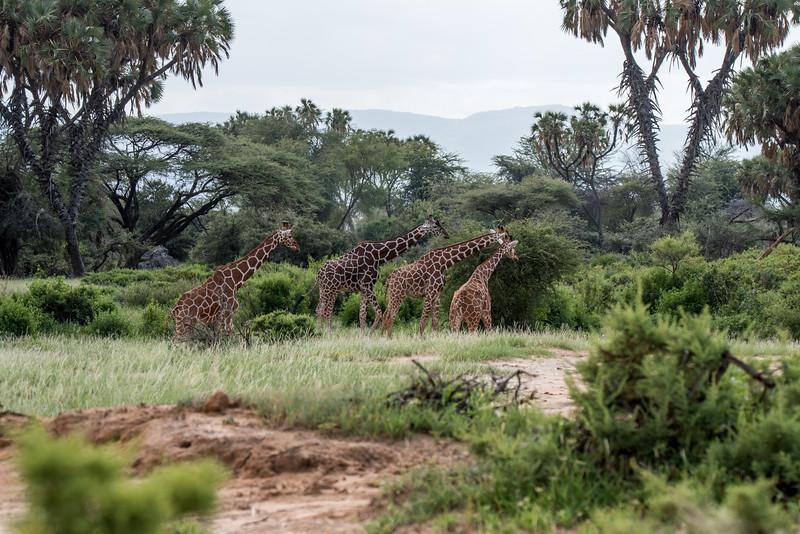 Samburu (49 of 70).jpg
