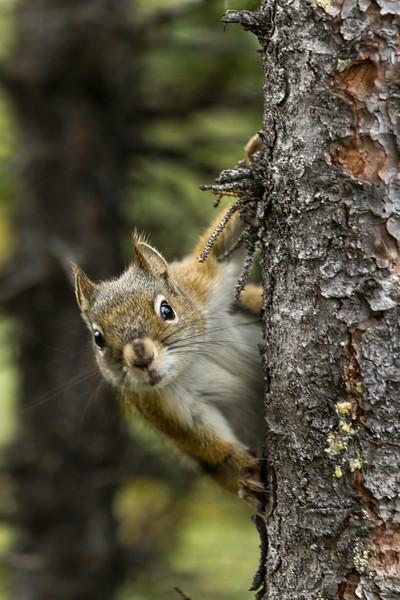 Tree squirrel.jpg