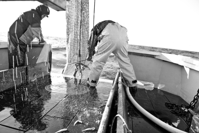 19. Shrimping with Proctor Wells, Gulf of Maine, February 2013.