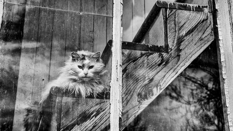 The Church Cat