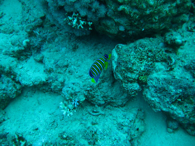 Adeline in Red Sea