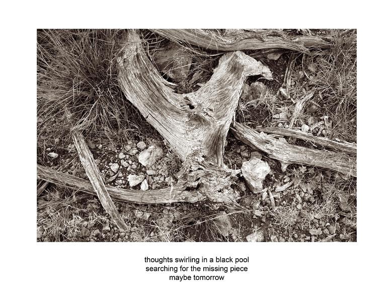 2006-11-04 Ozona Wood Study 2021 poem.jpg