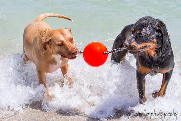 20140427dog_beach_fort_desoto_Tampa_Stephaniellenphotography.com-_MG_0485-Edit.jpg