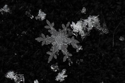 snowflakes-0468.jpg