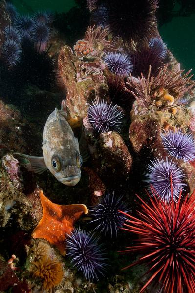 Rocky reef scene