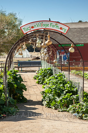 Tucson Village Farm Event