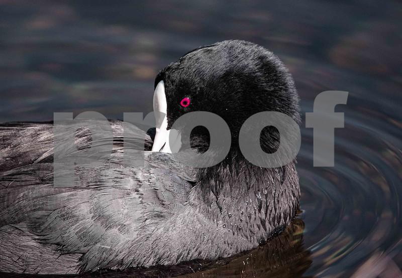 Water birds d sept 29 202037.jpg