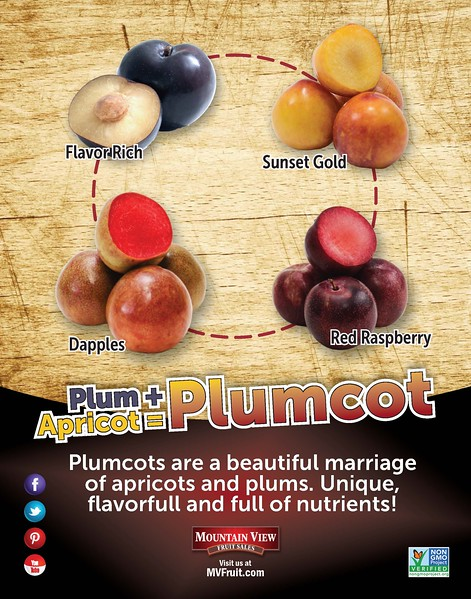What is a Plumcot poster 2018.jpg