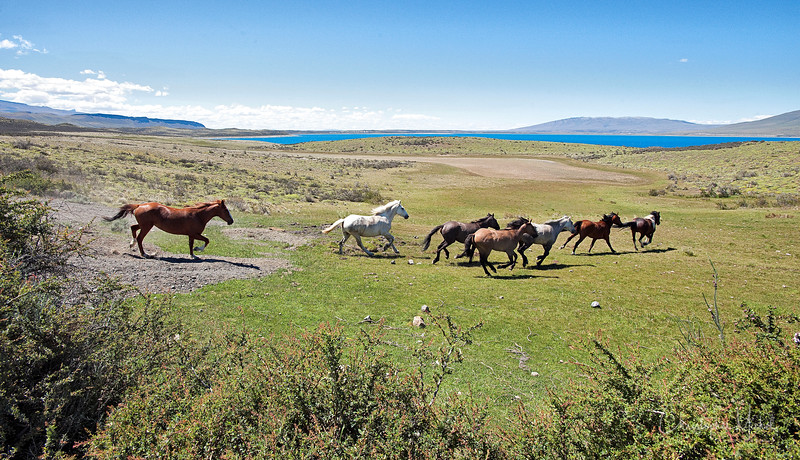 091214_torres_del_paine_riding_5765a.JPG