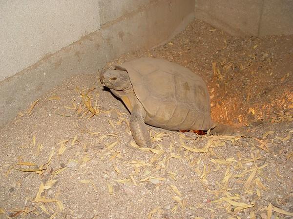 2005 Tortoises