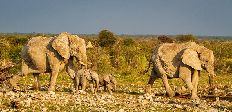 elephant group leave Klein Okevi (2 of 2).jpg