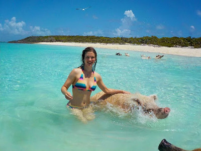 bahamas-swimming-withpiggies.jpg