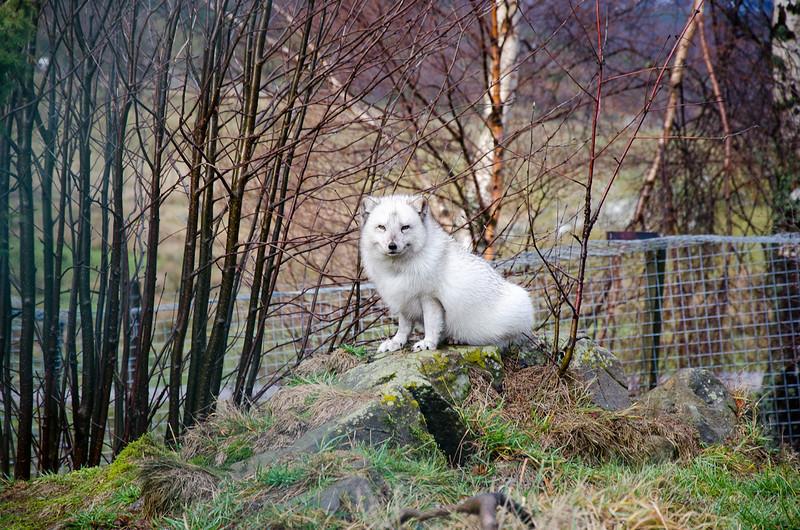 Scotland-Highland-9004.jpg
