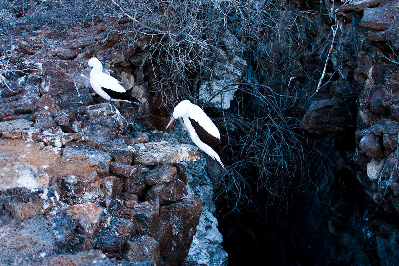 Standing on the Cliff : Journey into Genovesa Island in the Galapagos Archipelago