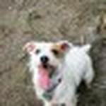 farley pups 072-2.jpg