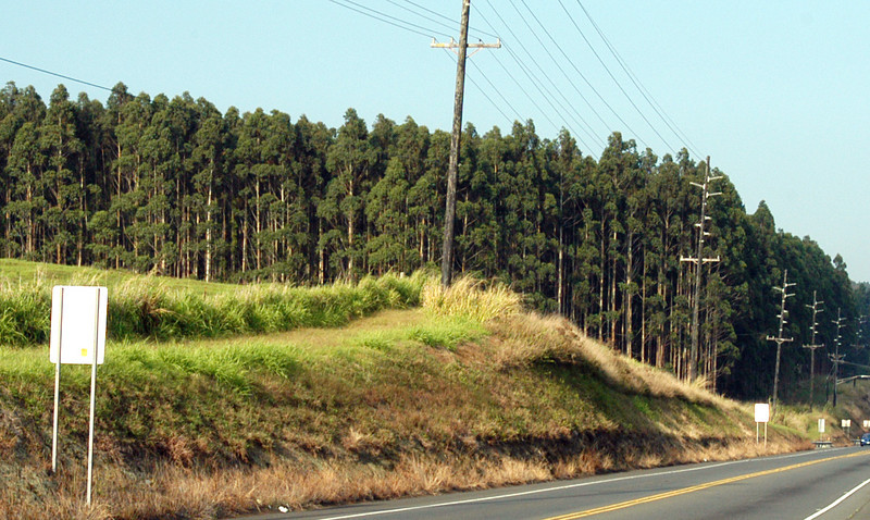 20080416- Hawaii 21- Weds Morning Road Trip DSC_3548-16.jpg