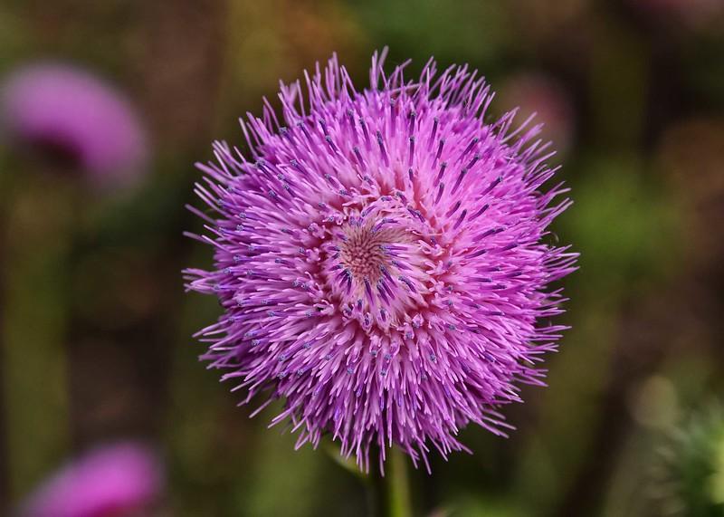 NEA_6818-7x5-Flower.jpg