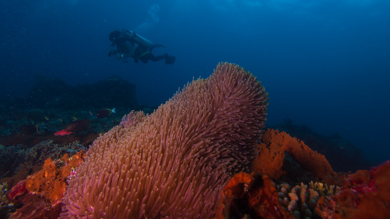Taken from Tafrika divesite in Hiri Island, North Maluku, Indonesia during our 8D7N excursion in March 2018